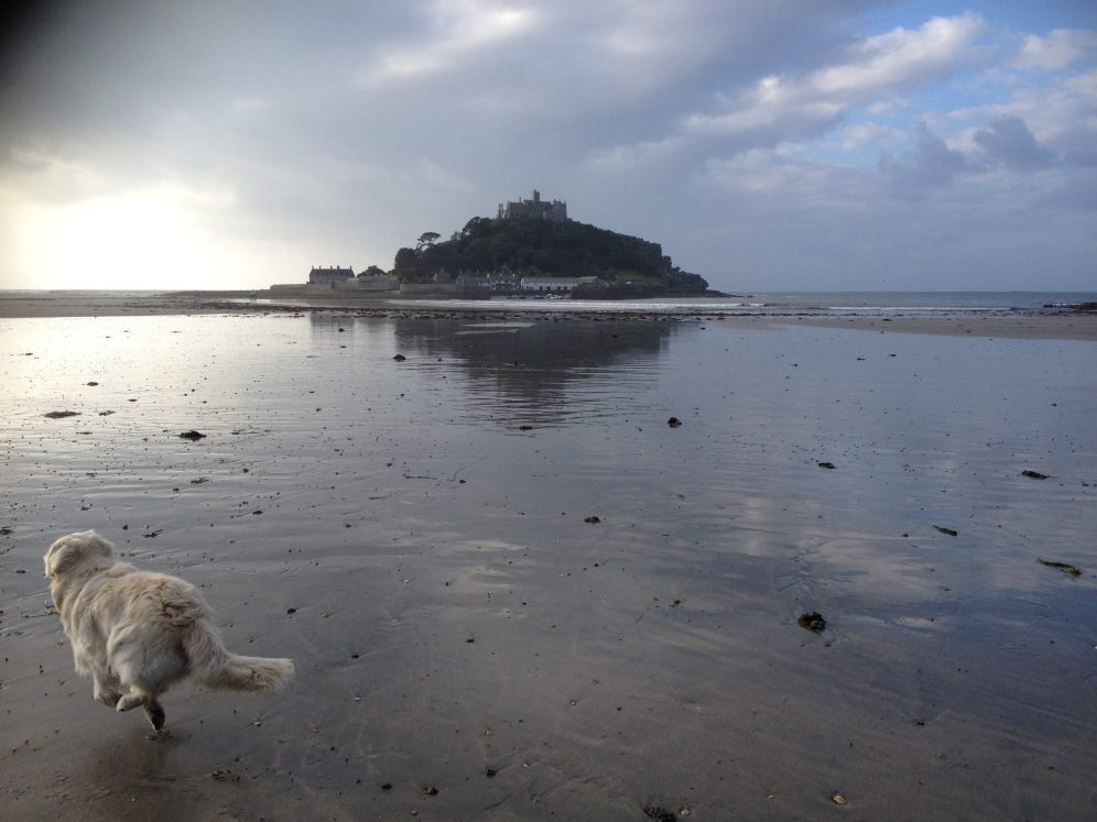 puppy , St Michaels Mount, Marazion, reflection, the best days, dog, cornwall